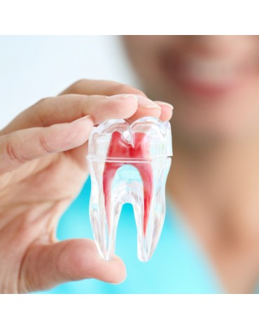 Premolars endodontics  (birradiculares)